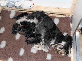Moeder&Pups